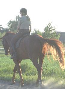 馬が教えてくれた
