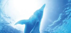 animal-dolphin
