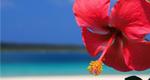 沖縄セラピーマスターコース