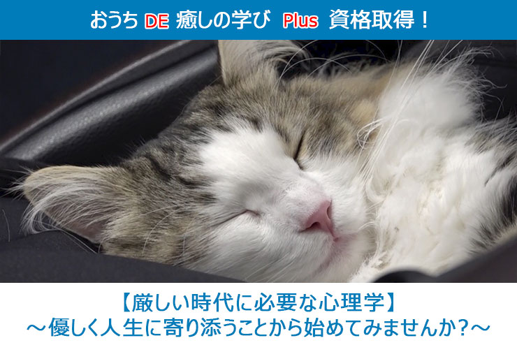 おうちDE癒しの学び Plus 資格取得!